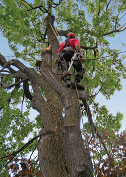 Tree Service Calhoun County AL