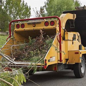 Tree Service Calhoun County AL